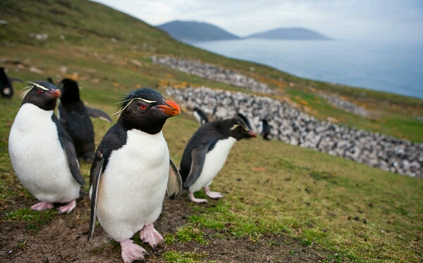 Running Reverend Set To Complete Falkland Islands Marathon As A Penguin!