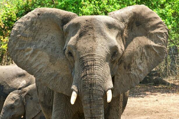 Training Rangers To Combat Illegal Wildlife Trade