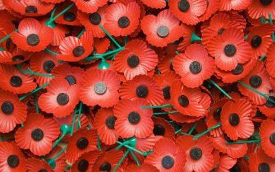 'Poppy-Up Shops' Ready For Centenary Appeal